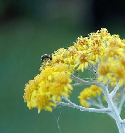Profil avec un insecte et des restes de toile d'araignée.