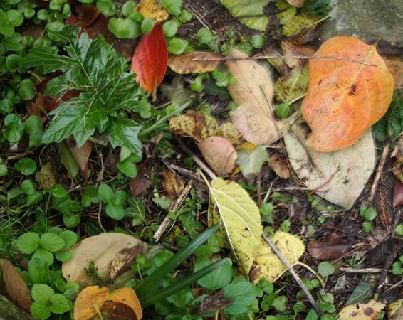Méli-mélo d'automne...17/11/2016