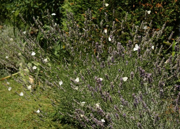 Tige Decor Jardin Grenouille En Vert