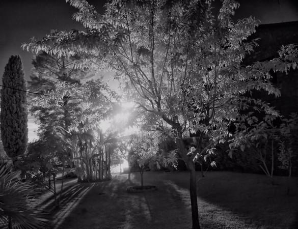De retour à la maison, nous contemplons l'illumination ultime de notre verger, juste avant le coucher définitif du soleill.