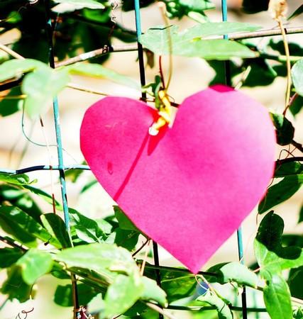 Il cuore, simbolo innegabile dell'amore, è stato il padrone di  Isola Maggiore durante tutto questo bello giorno…