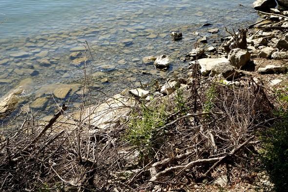 A voir l'état de la rive du lungolago de l'Isola Maggiore, il est manifeste que tout est en place pour que le Trasimène recule encore...31/05/2017