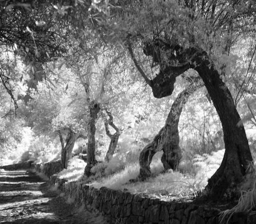 Strada di San Michele Angelo.Isola Maggiore.Vista un po onirica...Foto all'infrarosso