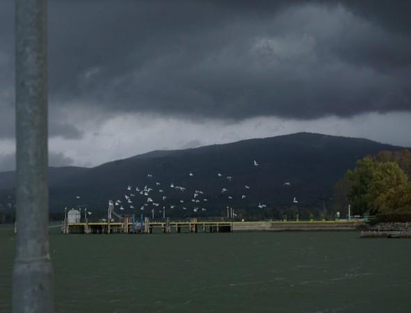 Les mouettes de l'Isola Maggiore n'apprécient visiblement pas l'arrivée de cette bourrasque avec son cortège de vents forts et de pluie.