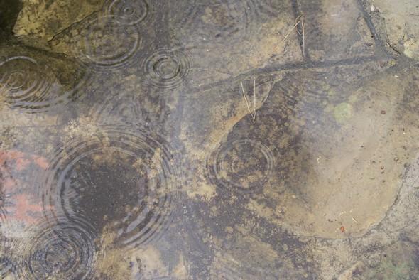 Gouttes de pluie dans l'allée de notre jardin  (2). F/4 - 1/1000 secondes - ISO-320 - 35mm