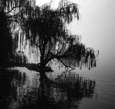 Et je m'en vais   Au vent mauvais  Qui m'emporte  Deçà, delà,   Pareil à la Feuille morte.    Paul Verlaine.