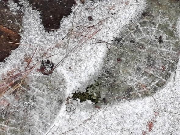 Cette fois, de la glace sous la fine pellicule de neige.L'impact d'un sérieux gel a laissé des stigmates dans notre jardin.1/03/2015   -   07:45
