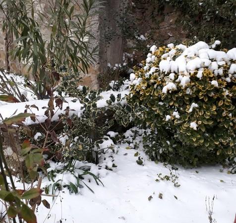 Discret quatuor de couleurs accompagné par la neige...