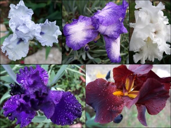 Mosaico di colori composoi da gladioli del nostro giardino.1 maggio 2018 - 19:48 1/30° - f/4 - 18 mm - ISO 400